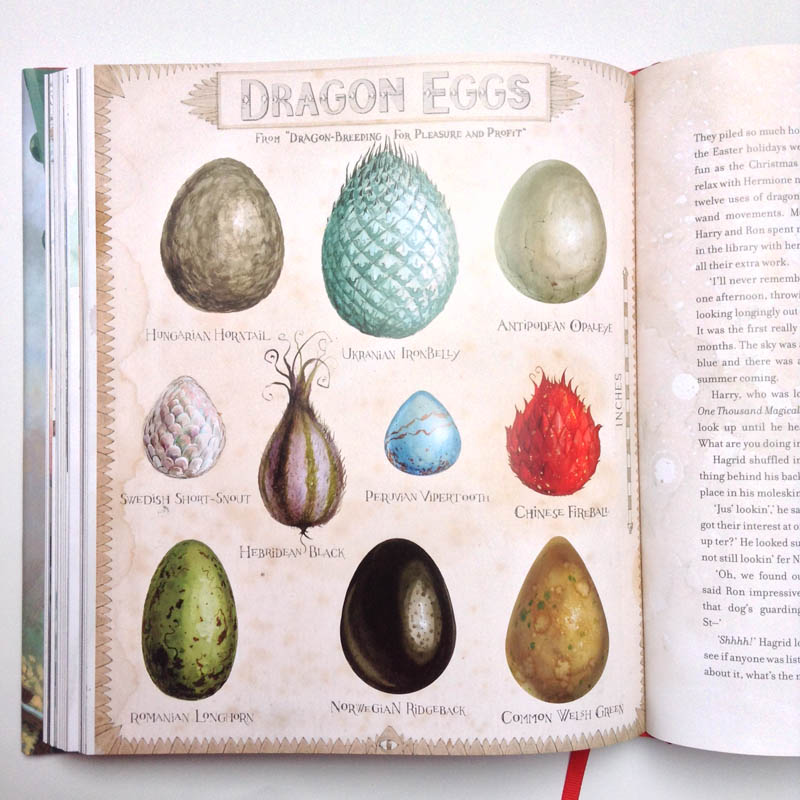 Harry Potter illustrated - Dragon eggs